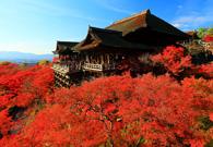 古都京都に乾杯!京都でおすすめの日本酒の銘柄と飲める店を大特集!のサムネイル画像